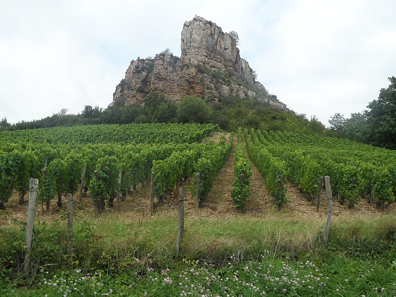 The vineyard at the foot of the Rock of Solutré.