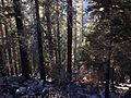 2013-09-19 17 31 02 Smoke and burned trees from the Rim Fire in Yosemite National Park.JPG