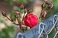 2015-365-144 I'm On the Fence, Too (17881308588).jpg