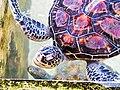 20160129 Sri Lanka 4191 Habaraduwa sRGB (25139072394).jpg