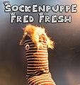 2018-Sockenpuppe Fred.jpg