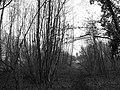 25250 L'Isle-sur-le-Doubs, France - panoramio (6).jpg