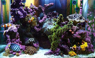 Marine aquarium - Nano reef aquarium maintained at home