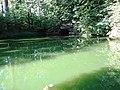 3. Ахеронтійське озеро (Мертве озеро), (парк «Софіївка»), Умань.JPG
