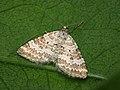 70.137 BF1807 Grass Rivulet, Perizoma albulata (4672657708).jpg