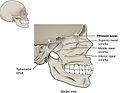 731 Nasal Cavity.jpg