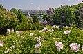 80-382-5001 Grishka park DSC 2930.jpg
