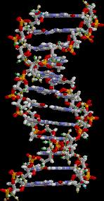 ADN static