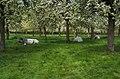 A nice resting place - panoramio.jpg