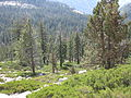 A view from the Tioga Road IMG 4395.JPG