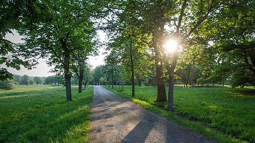 Lainzer Tiergarten (im Wienerwald): Abends, Nähe Pulverstampftor