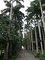 Aburi garden 4.jpg