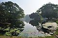 Acharya Jagadish Chandra Bose Indian Botanic Garden - Howrah 2011-01-08 9735.JPG
