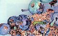 Acrobasis vaccinii 1496495.jpg