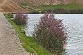 Adelabad dam 2020-04-25 05.jpg