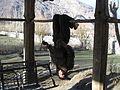 Afghanistan(38).jpg