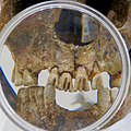 Aichi Dental Association's Teeth Museum No - 7.jpg