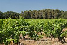 Provence wine - Wikipedia, the free encyclopedia