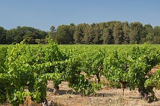 Provence wine - Vineyards in the Coteaux d'Aix-en-Provence region.