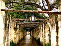 Alamo - Flickr - SnapsterMax.jpg
