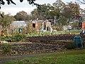 Allotment Gardens at Hatchford Brook, Sheldon - geograph.org.uk - 85100.jpg