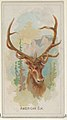 American Elk, from the Wild Animals of the World series (N25) for Allen & Ginter Cigarettes MET DP836476.jpg