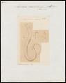 Amphiuma didactylum - 1700-1880 - Print - Iconographia Zoologica - Special Collections University of Amsterdam - UBA01 IZ11400177.tif