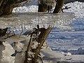 Angefrorene Eisscheibe vom Elbehochwasser 2012 - panoramio.jpg