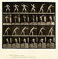 Animal locomotion. Plate 286 (Boston Public Library).jpg