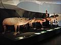 Animaux votifs (Musée du Quai Branly) (4489187631).jpg