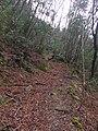 Antico sentiero presso Buca della Volpe - panoramio.jpg