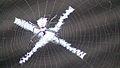 Arañas x.jpg