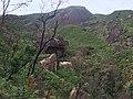 Araras, Petrópolis - RJ, Brazil - panoramio (19).jpg