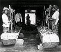 Arbeiders die cocabladeren fijnstampen op Java.jpg
