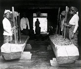 Coca - Workers in Java prepared coca leaves. This product was mainly traded in Amsterdam, and was further processed into cocaine. (Dutch East Indies, before 1940.)