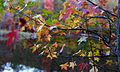 Autumn-tree-leaf-colors-bokeh-lake - West Virginia - ForestWander.jpg