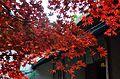 Autumn foliage 2012 (8253623526).jpg