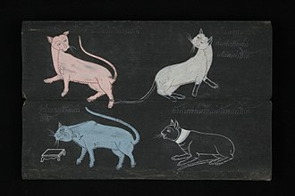Siamese cat - Suphalak cat, Siamese cat, Korat cat and Ninlachak cat in Tamra Maew (The Cat-Book Poems) thought to originate from the Ayutthaya Kingdom (1351 to 1767 AD). Over a dozen are now kept in the National Library of Thailand.