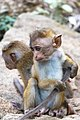 Baby Monkey Siblings.jpg