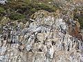 Bahía Ushuaia 251.JPG