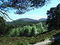 Ballochbuie Forest view - geograph.org.uk - 1328196.jpg