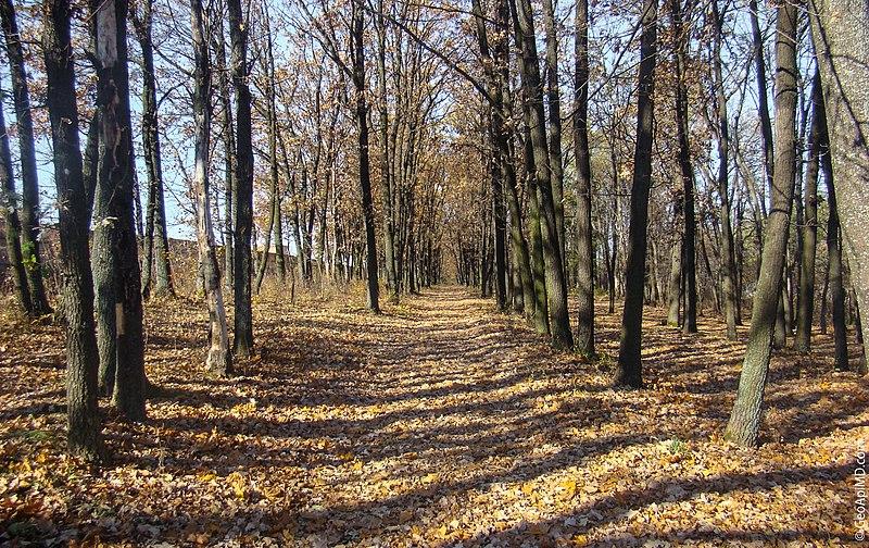 Balti, Moldova