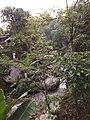 Ban Jhakri Falls - Sikkim - Wikipedia (6).jpg