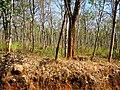 Bandipur Tiger Reserve - panoramio (25).jpg