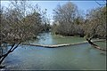 Banias Reserve 2020-01-11 IZE-146.jpg