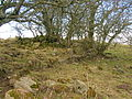 Bank of Giffen farm ruins, near Barrmill.JPG