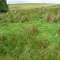 Barley-with-Wheatley Booth, UK - panoramio (5).jpg
