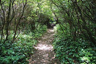 Bartram Trail - Bartram Trail on Rabun Bald