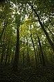 Belgium Steenmolenvoetweg (22731502596).jpg