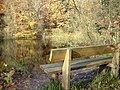 Bench by the reservoir in Chepstow Park Wood - geograph.org.uk - 1043714.jpg